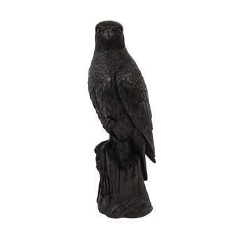 Coin Falcon